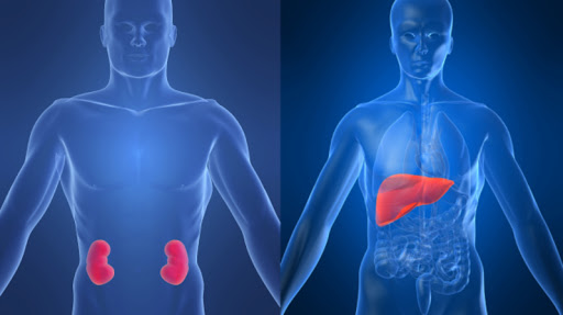 GW 50156 liver and kidneys